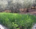 CISGIORDANIA - acqua fitodepurata grazie alla fiorentina Iridra